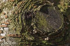 Tree Bark (ereid88) Tags: macro focus outdoor treebark flickrphotowalk macrotextures macromondays