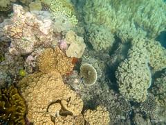 W-IMG_2676 (baroudeuses_voyage) Tags: ocean sea coral oz australia diving snorkeling cairns reef greatbarrierreef cay eastcoast australie atoll gbr michaelmascay oceanspirit grandebarrieredecorail