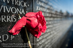 Red Rose on Wall (Steven Green Photography) Tags: vietnamwarmemorial washington washingtondc fallen flower loss memory military names redrose rose travel wall war