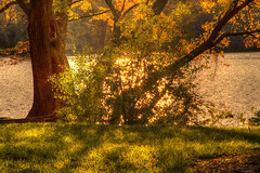 Resplandor - Glow (Bernai Velarde-Light Seeker) Tags: resplandor glow river rio potomac washington dc usa bernai velarde tree