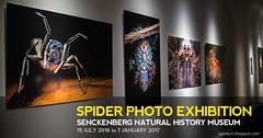 Spider Photo Exhibition @ Senckenberg Natural History Museum (nickybay) Tags: spider photo exhibition frankfurt senckenberg germany museum macro