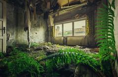 back to the primeval (Nils Grudzielski) Tags: lostplaces abandonedplaces urbanexploration nature natur indoor decay marode morbide urbex forgotten old ddr bro verlasseneorte verfall