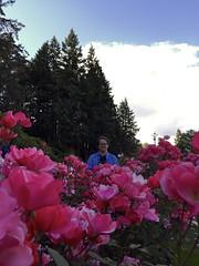 International Rose Test Garden (hey_deeps) Tags: oregon portland burns 2016 washingtonpark