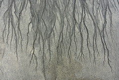 Roots (nick edge) Tags: sand lines abstract iona innerhebrides scotland scottishislands beach explore explored
