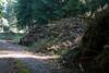 ckuchem-8332 (christine_kuchem) Tags: abholzung baum baumstämme boden bodenverdichtung bäume einschlag fahrspuren fahrzeuge fichten holzeinschlag holzwirtschaft lastwagen maschienen spuren verdichtung wald waldfahrzeug waldwirtschaft zerstörung schwer tief
