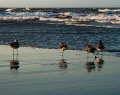 Life itself your teacher (joseph.defrias) Tags: sunset beach birds canon marine aves panama xti