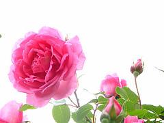 16459245013_034ef2e2d0_m (Lihy Arts) Tags: ☀ ღ ♫♫ ❤ ☀ღ♫♫❤ ♪ musicforthemind happiness bonnejournée ღϟツ ϟღツ amoureux amitié romantique romanticlove love romantic 情人节 バレンタイン การ์ดแสดงความรัก greetingcards cartesdevœux 有花 草 山 水 樹 美 讚 merci lihi tain m lyy25 יעל
