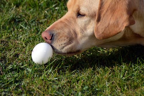 Sam und das Ei.