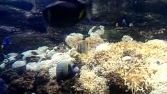 Aquarium (levin.dimon) Tags: ocean fish nature aquarium aqua underwater seaocean