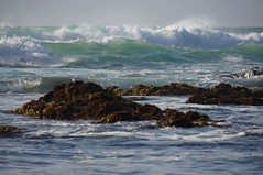 Frothy (charlottes flowers) Tags: beach water waves pacificocean asilomar