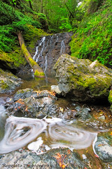 Eggs Anyone? (Jared Ropelato) Tags: california statepark fern green nature water northerncalifornia creek forest river outdoors photography waterfall moss spring stream natural hike trail coastal photograph mttam recreation tamalpais cataract 2015 mouttam jaredropelato ropelatophotography