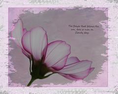 Garden Flowers (104 of 6) (derena_d.) Tags: flowers sun flower texture canon words cosmos textured memoriesbook photography2014canonderena akersgarden
