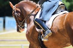 IMG_4948 (dreiwn) Tags: horse pony horseshow pferde pferd equestrian horseback reiten horseriding dressage reitturnier dressur reitsport dressyr dressuur ridingclub ridingarena pferdesport reitplatz reitverein dressurreiten dressurpferd dressurprfung tamronsp70200f28divcusd jugentturnier