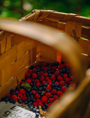 Forest treasures (cablefreak) Tags: lumix gx8 leica nocticron forest treasure berries harvest raspberry blueberry