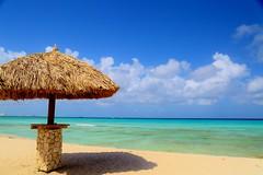 Aruba 2016 (Lee Armstrong Jones) Tags: aruba caribean holiday beach sky sea paradise nature ocean canon 5d mkiii sunset beautiful vacation ilovearuba dutch island sand bluesea 24105mm 100400mm flickrtravelaward caribbean arubacaribeanholidaybeachskyseaparadisenatureoceancanon5dmkiiisunsetbeautifulvacationilovearubadutchislandsandbluesea24105mm100400mmtreedruifdruifbeachtamarijnflickrtravelaward blue treeflickrtravelaward caribbeanholiday