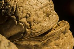 Walnut (M_Theory) Tags: nikon macro walnut 105mm