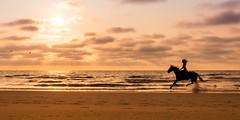Run to the sun (marielledevalk) Tags: evening goldenhour holland dutch summer horse sunset sun sky sand beach sea