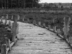 Holzweg (michaelmueller410) Tags: bw white black swamp moor holz weg steg sumpf balken schwarzweis moorweg