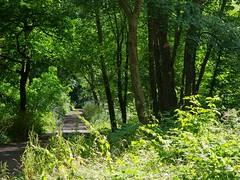 1289-36L (Lozarithm) Tags: landscape paths marlborough k50 55300 pentaxzoom hdpda55300mmf458edwr