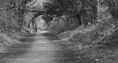 I Walk a Lonely Path (ONETERRY. AKA TERRY KEARNEY) Tags: monochrome blackandwhite trees forest bushes fields cheshirefields nature bridges art canoneos1dmarkiv canon cheshire daylight day explore europe england ellesmereportcheshire flickr flowers july july2016 kearney landscape merseyside oneterry outdoor roads sunshine skyline terrykearney urban wildlife weather 2016