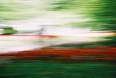 000015 (seustace2003) Tags: keukenhof nederland niederlande holland pays bas paesi bassi an sitr tulip tulp tulipan tiilip tulipa