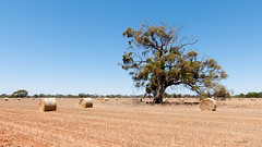 Sky knew no clouds (summer of 2009) (Derek Midgley) Tags: summer hot country dry australia victoria drought hay bales arid scorched sunbaked dsc7340