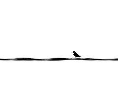 P3800736_edited-1 impression ! (gpaolini50) Tags: emotive esplora explore emozioni explora landscape uccellino bw biancoenero bianconero blackandwhite vision photoaday photography p photographis photographic photo phothograpia