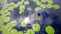20160729_111724-1 (sonja_boy) Tags: reflection water clouds shadow