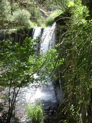 Flora de pared. (margabel2010) Tags: cascadas cascada presa presas flora hojas ramas rboles pared paredes agua aguadulce airelibre blanco blancoyverde