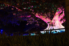 _MG_4817.jpg (Tibor Kovacs) Tags: night colours tree vivid australia events sydney projections light