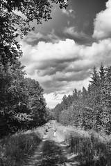 Mindful (helen.lindholm) Tags: blackwhite boy forest norrland sverige svartvitt