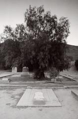 Exa 1C Spadra Cemetery 6 () Tags: vintage retro classic film camera losangeles california riverside history west coast architcture eastgerman ddr gdr exa dresden slr 35mm black white bw kodak tmax m42 abandoned cemetery