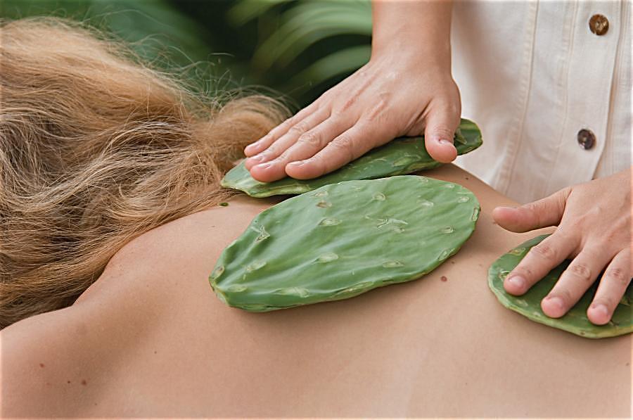 6Mát-xa bằng xương rồng giúp loại bỏ độc tố và cung cấp nước cho làn da
