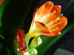 "Frohe Ostern - Happy Easter (Gartenzauber) Tags: gorgeous ngc blume clivia coffeetime floralfantasy welikeit sonice masterphotos perfectpetals flickrheart macroelsalvador excellentsflowers natureselegantshots exquisiteflowers mimamorflowers flickrflorescloseupmacros flowerarebeautiful saariysqualitypictures thebestofmimamorsgroups greatshotss ""doublefantasy"" mixofflowers flickrsportal esenciadelanaturaleza flickrheartgroup"