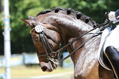 IMG_5085 (dreiwn) Tags: horse pony horseshow pferde pferd equestrian horseback reiten horseriding dressage reitturnier dressur reitsport dressyr dressuur ridingclub ridingarena pferdesport reitplatz reitverein dressurreiten dressurpferd dressurprüfung tamronsp70200f28divcusd jugentturnier