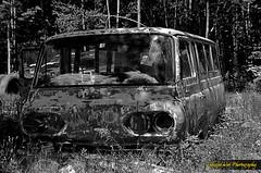 Forgotten Ford (Tangled Web Photography) Tags: ford abandoned junk nikon rust decay neglected 1966 1967 junkyard scrapyard 1964 1965 salvageyard d5100 tangledwebphotography