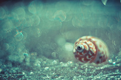La caracola (RoCafe) Tags: pentacon50mmf18 seashell bokeh stilllife pentacon nikond600