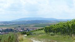 Der Donnersberg