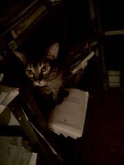 Gatos no inverno (César dos Santos) Tags: pets tripa home rs portoalegre winter cats indoor
