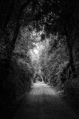 Dark way (Cmuozfernandez) Tags: black white way path camino sendero natural naturaleza tree arbol arboles trees ligth luz dar oscuro sombra shadow leaf hojas trunk tronco rama branch piedras stones