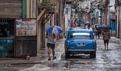 Walk to Work (Mitch Ridder Photography) Tags: cuba havanacuba islandofcuba cuban caribbean largestcaribbeanisland island havana capitol rain rainyday rainphotography streetphotography workshop photoworkshop travelphotography cameravoyages mitchridder mitchridderphotography mitchridderphotographyallrightsreserved2016 havanastreet