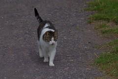 1287-11L (Lozarithm) Tags: cats pets canals paths kennetavon k50 seend 55300 sellsgreen pentaxzoom hdpda55300mmf458edwr