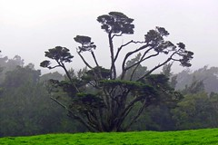 The_Tree_Of_Life (nickinsauk2010) Tags: hawaiianphotography treeoflife hawaii