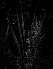 Leaves and Flowers, Highland Lake State Park, New York (nsandin88) Tags: highlandlake olympus natural omd ny newyork exploration leaves bandw wild mft outside statepark getoutthere plant blackandwhite outdoors park bw blackwhite em1 m43