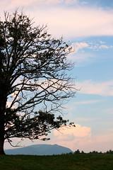 Day's end (goldengirl 2011) Tags: verticallandscape outdoor clouds tree ashevillenc ashevillenorthcarolina ashevillenorhcarolina biltmoreestate biltmorelandscape daysend katharinehanna treesilhouette pinkclouds inthesearmsjenniferberezan