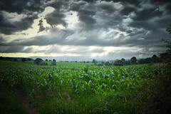 Fields & Clouds (jamesromanl17) Tags: field fields cloud clouds countryside sky sunlight cheshire storm stormy foveon sigma merrill x3