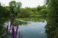 Cable pond (robertmarshall456) Tags: cablepond water green fishing lake d5300 nikon pond trees reflections