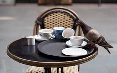 Uninvited Guest (petercooper131) Tags: london pigeon coffee bankside south bank tea animal bird drink lunch