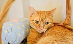 Furry~ (BHiveAsia) Tags: cat cats kitten kitty feline felines wild life wildlife animal animals nature pet pets portrait