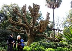Royal Botanic Gardens in a Melbourne winter (set of 12) (Lesley A Butler) Tags: australia garden landscape melbourne nature royalbotanicgardens victoria
